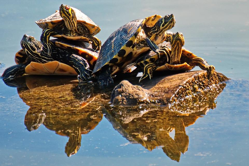 Le substrat pour le terrarium des tortues